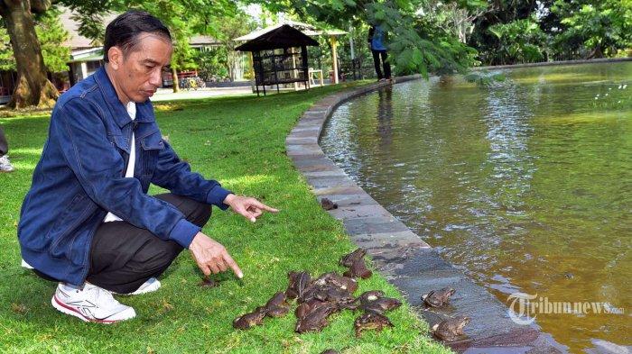 Presiden Jokowi Punya Kolam, Isinya Kecebong Semua