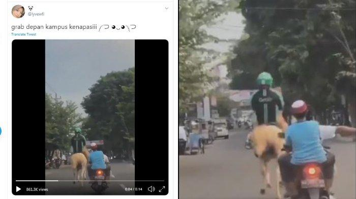 VIRAL Video Pria Beratribut Ojol Tunggangi Kuda di Kawasan Kampus UMS Solo, Warganet: Keren