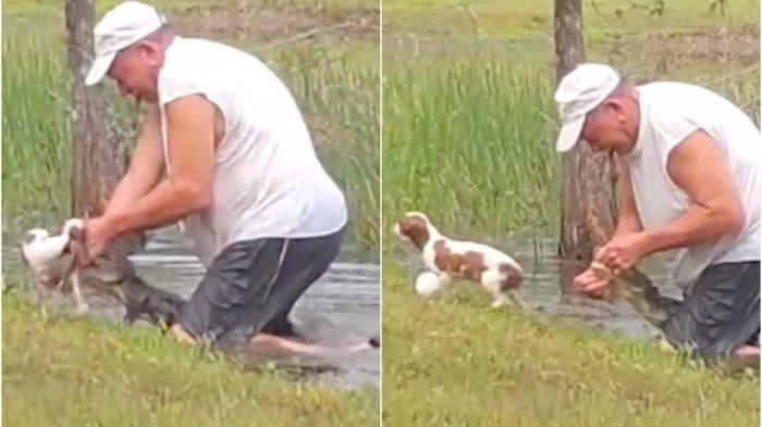 pria-tua-selamatkan-anak-anjingnya-dari-terkaman-aligator.jpg