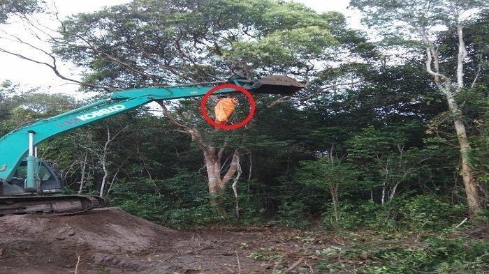 Evakuasi Pria Gantung Diri di Pohon Tinggi Pakai Ekskavator, Isi Surat Korban Penuh Minta Maaf