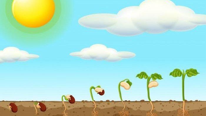 Cara Tumbuhan Menyesuaikan Diri dengan Lingkungan Tempat Hidupnya