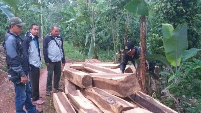 Ilustrasi - Puluhan batang kayu sonokeling diduga hasil illegal logging diamankan Polisi Kehutanan KPHL Batu Tegi. Tribun Lampung/Tri Y