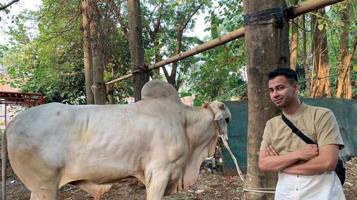 Rayakan Idul Adha, Raffi Ahmad kurban 17 hewan untuk keluarga dan karyawannya