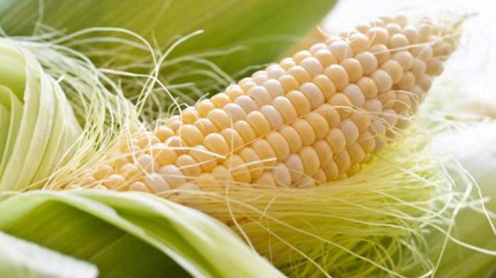 Rambut jagung berkhasiat mengatasi osteoporosis yang dialami wanita menopause.