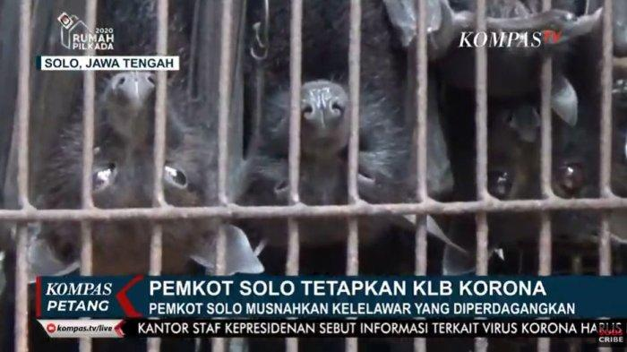 Kota Solo KLB Virus Corona, Ratusan Kelelawar di Pasar Hewan Depok Solo Dimusnahkan