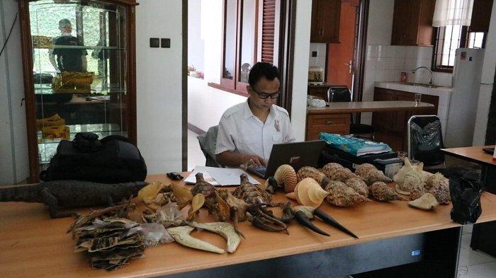 Gakkum LHK Jabalnusra Ungkap Perdagangan Online Organ Hewan Dilindungi
