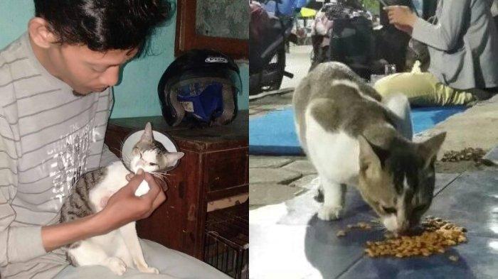 Viral Kisah Inspiratif Warga Tegal Rawat Kucing Liar yang Sakit, Pakai Obat Alami dan Alat Seadanya