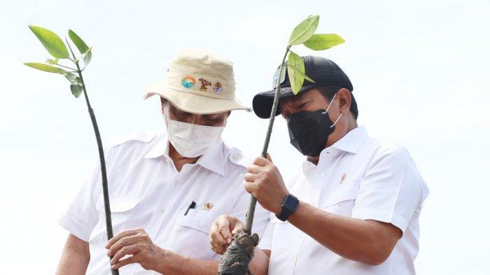 KKP Dukung Rehabilitasi Mangrove untuk Kesehatan Pesisir dan Peningkatan Ekonomi Masyarakat