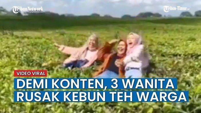 Demi Dapatkan Foto, Tiga Gadis Ini Nekat Selfie hingga Rusak Kebun Teh, Dikecam Warganet