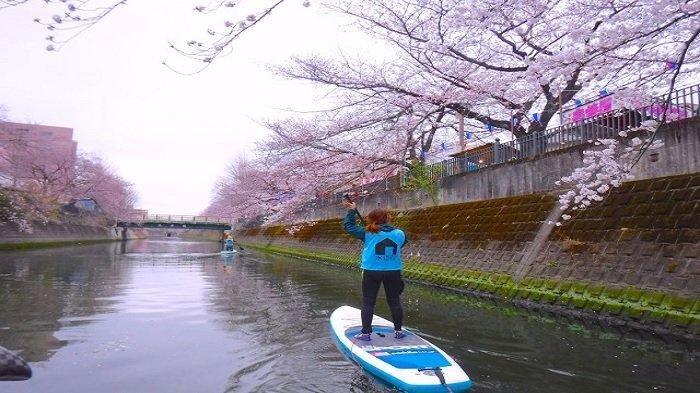 Reporter Soranews24, Momo menikmati hanami dari atas SUP di Sungai Ooka