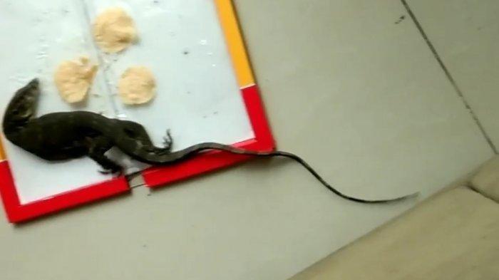 Raisaa Kaget Hewan Berekor Panjang Masuk Perangkap Lem Tikus yang Dipasang di Rumah