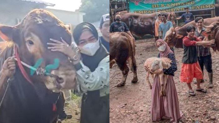 Borong Hewan Kurban, Ria Ricis Beri Nama Unik pada Sapinya