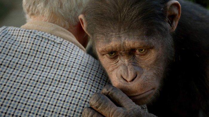 Tribunwiki Rise Of The Planet Of The Apes 2011 Revolusi Kera Yang Berubah Jadi Penguasa Bumi Tribunnews Com Mobile
