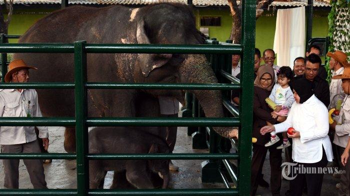 Cegah Penyebaran Corona, Kebun Binatang Surabaya Ditutup hingga 29 Maret