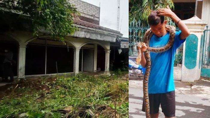 Rumah Komedian Ternama di Solo Jadi Sarang Ular, Kosong dan Tak Terawat 10 Tahun