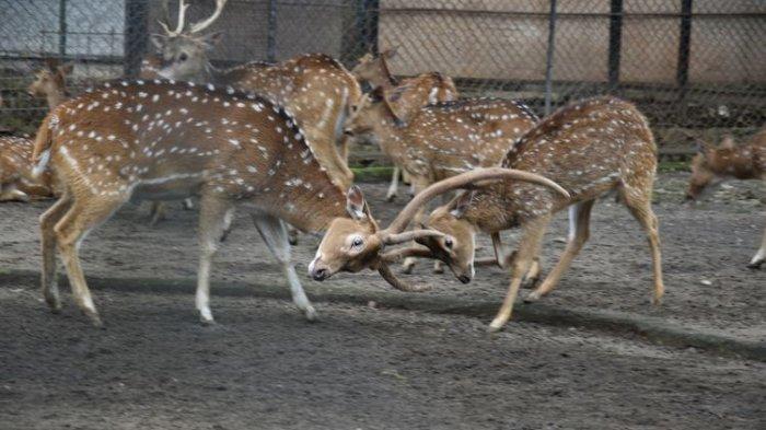 Ada Isu Satwa di Kebun Binatang Kehabisan Pakan, Ini Penjelasan Kementerian Lingkungan Hidup