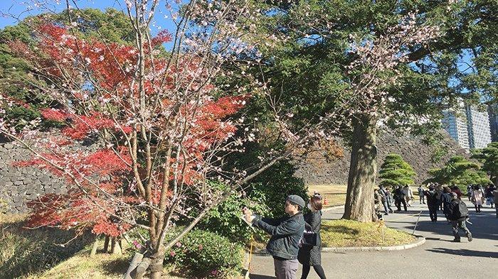 Saatnya Menikmati Keindahan Kokyo Gaien, Taman Kekaisaran Jepang