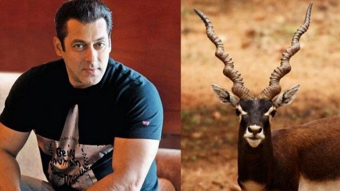 Jadi Tersangka Kasus Pemburuan Antelop India, Salman Khan Dapat Ancaman dari Organisasi Mahasiswa