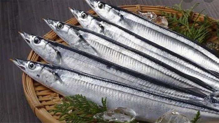 Konferensi Internasional, Jepang Usulkan Kurangi Penangkapan Ikan Sanma di Pasifik