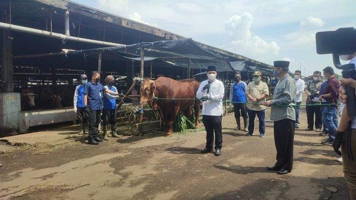 Wakil Gubernur DKI Jakarta Ahmad Riza Patria menyerahkan secara simbolis sapi kurban miliknya untuk disembelih di Rumah Pemotongan Hewan (RPH) Dharma Jaya, Cakung, Selasa (20/7/2021).