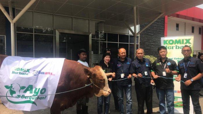PT Bintang Toedjoe Sumbang Sapi Kurban Limosin Berbobot 1 Ton Lebih kepada Tribunnews
