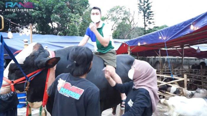 Raffi ahmad awalnya nampak ketakutan dan menolak saat dipersilahkan oleh pemilik sapi untuk naik.