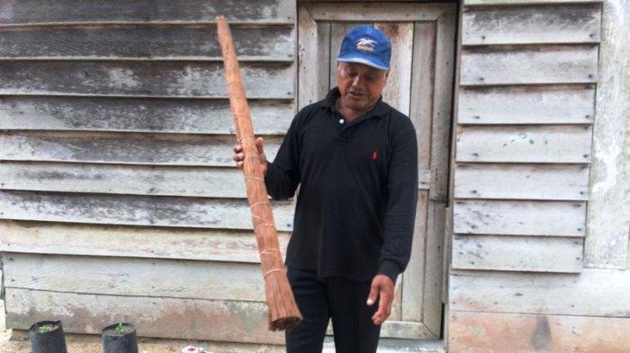Kisah Saptu, Petani Madu Hutan Sialang Bertahan Merawat Tradisi