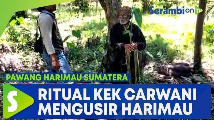 Pawang asal Meulaboh Diturunkan Usir Harimau yang Terkam 2 Sapi di Kluet Timur Aceh