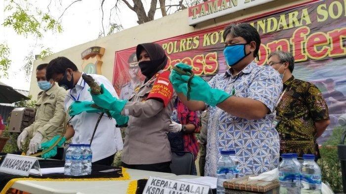 Ketahuan Petugas Bandara, Puluhan Reptil Papua Hingga Australia Gagal Diselundupkan ke Indonesia