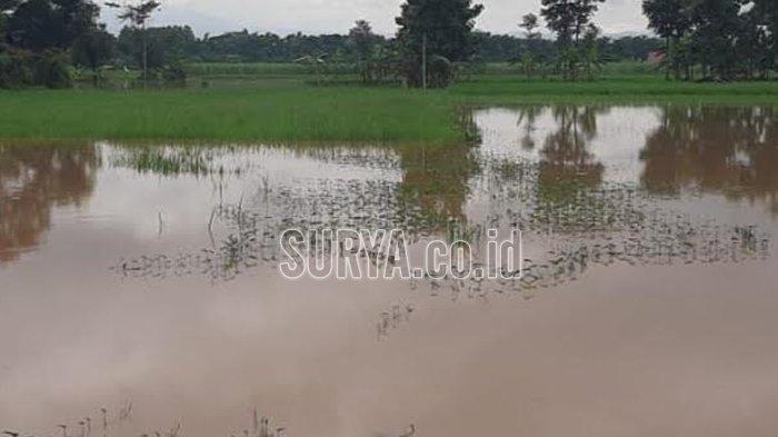 Terendam Banjir, 83 Hektar Sawah Petani Ponorogo Terancam Gagal Panen