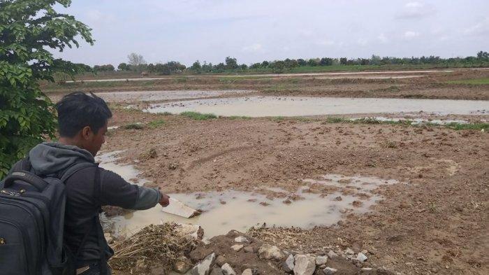 Sawah milik warga di Dusun Harendong, Desa Sukaslamet, Kecamatan Kroya, Kabupaten Indramayu hancur tidak berbentuk pascaditerjang banjir bandang, Kamis (2/1/2020).