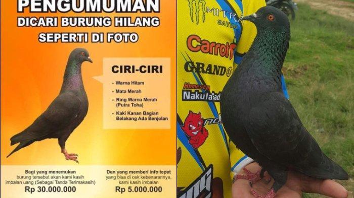 Rela Buat Sayembara Berhadiah Rp 30 Juta, Rendi Bersujud Saat Bertemu Lagi dengan Burung Merpatinya