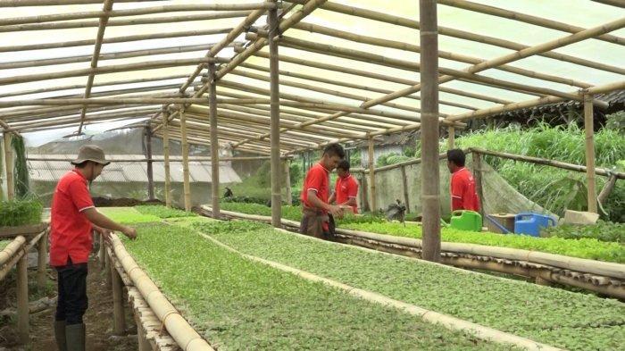 Usaha Petani Muda Semarang dalam Kembangkan Pertanian Organik