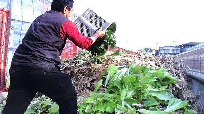 Sebanyak 2,5 ton sayur-sayuran dibuang di salah satu lokasi pertanian di Jepang.