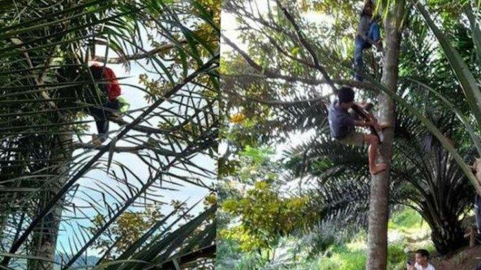 Cerita Siswa di Simalungun Belajar Online, Tempuh Perjalanan 2 Km dan Panjat Pohon demi Dapat Sinyal