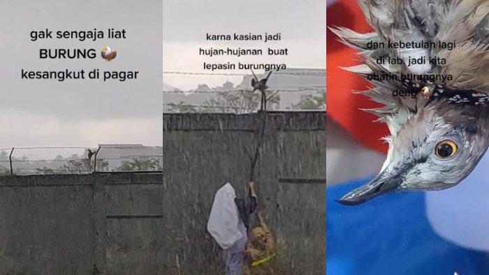 Demi Selamatkan Burung Tersangkut di Pagar Kawat, Gadis Ini Terjang Hujan Deras, Aksinya Berhasil