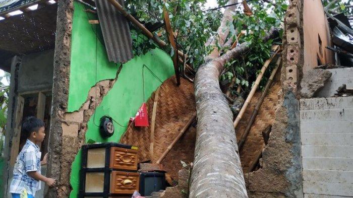 Tak Ada Hujan dan Angin, Wisatawan di Kaliurang Tewas Tertimpa Pohon