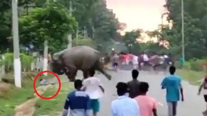 Seorang Pria Tewas Diinjak Gajah, Sempat akan Melarikan Diri hingga Orang-orang di Sekitar Berteriak