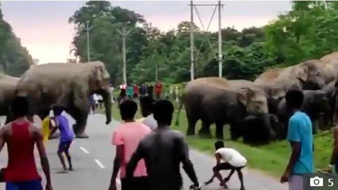 Seorang pria tewas diserang gajah. (Kredit: Tahir Ibn Manzoor Via The Sun)