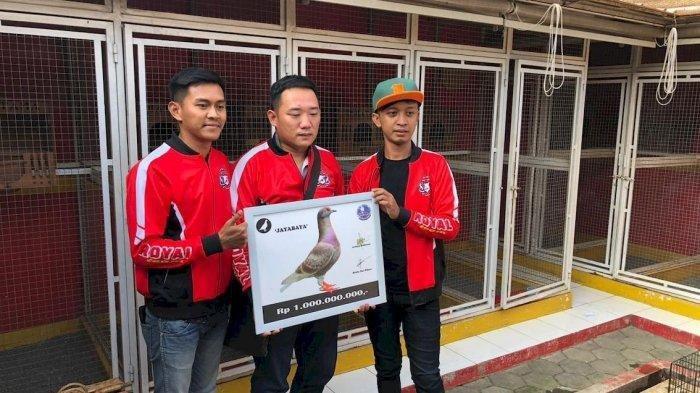 Burung Merpati Milik Seorang Warga di Bandung Terjual Rp 1 Miliar, Sering Juarai Perlombaan
