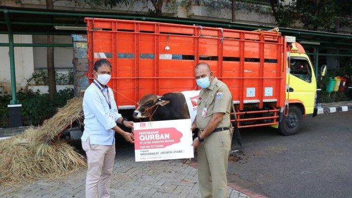 Jelang Idul Adha 2020, Daihatsu Donasikan 67 Hewan Kurban ke 3 Wilayah