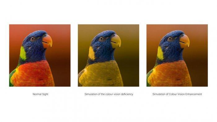 Simulasi Colour Vision Enhancement di smartphone Oppo Find X3 Pro 5G.