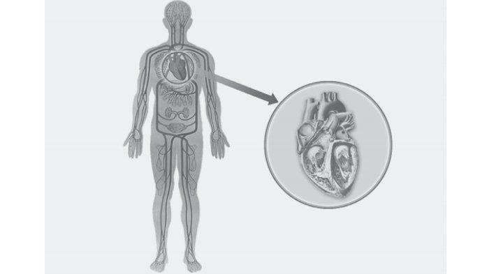 Tak Boleh Sembarangan, Obat Pengencer Darah Hanya Boleh Dikonsumsi dalam Kondisi Tertentu