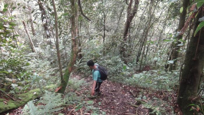 Kisah Warga Padang Pariaman 3 Malam Tersesat di Hutan Usai Diserang Lebah, Awalnya Cari Pohon Gaharu