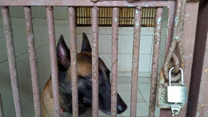 Sparta, anjing milik presenter Bima Aryo, di Pusat Pelayanan Kesehatan Hewan dan Peternakan (Puskeswan) Ragunan, Pasar Minggu, Jakarta Selatan, Rabu (4/9/2019).