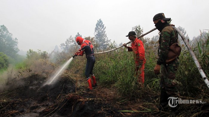 Warga yang menggunakan kostum pahlawan super spiderman bersama personil dari BPBD Provinsi Riau dan TNI AD Kodim Kampar 0313 berusaha memadamkan kebakaran lahan di kawasan Desa Rimbo Panjang, Kabupaten Kampar, Kamis (12/9/2019). Aksi yang dilakukan oleh warga bernama Yandri tersebut merupakan bentuk dukungan terhadap para anggota tim penanganan kebakaran hutan dan lahan yang telah berjibaku dilapangan selama kabut asap menerpa sejumlah wilayah di Provinsi Riau. Aksi itu juga merupakan pesan agar seluruh elemen masyarakat dapat ikut serta menjaga lingkungannya agar terhindar dari kebakaran hutan dan lahan. TRIBUN PEKANBARU/THEO RIZKY