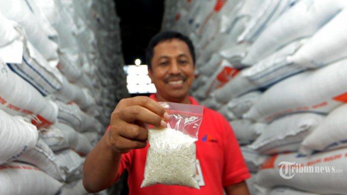 Pedagang Beras: Petani Bisa Rugi Jika Pemerintah Mengimpor Saat Stok Melimpah