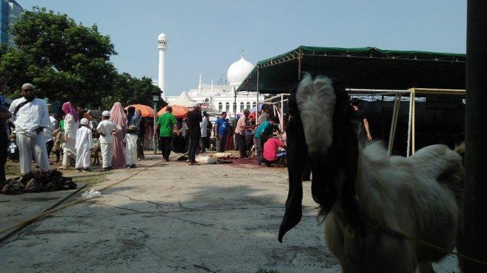 Idul Adha 1440 H, Masjid Agung Al Azhar Siapkan 12 Ekor Sapi dan 148 Kambing untuk Disembelihs