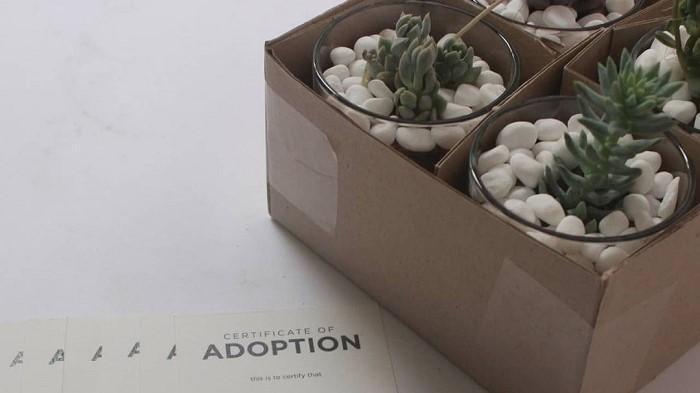 Sukulen Mini dari Abane Succulent.