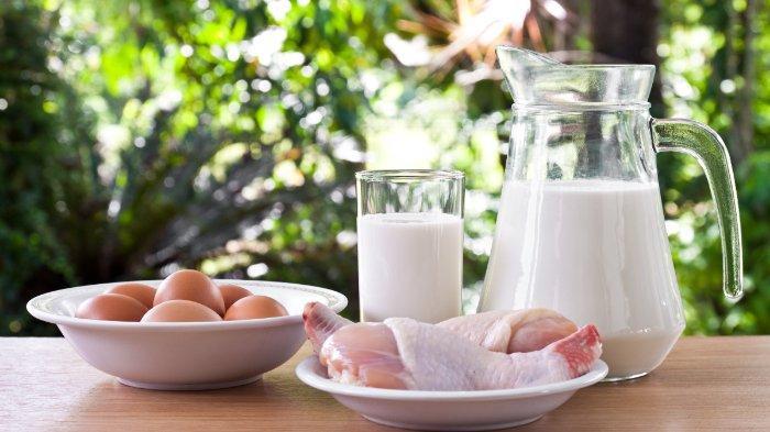 Pentingnya Protein Hewani & 9 Asam Amino Esensial bagi Tumbuh Kembang Anak, Saatnya Cegah Malnutrisi